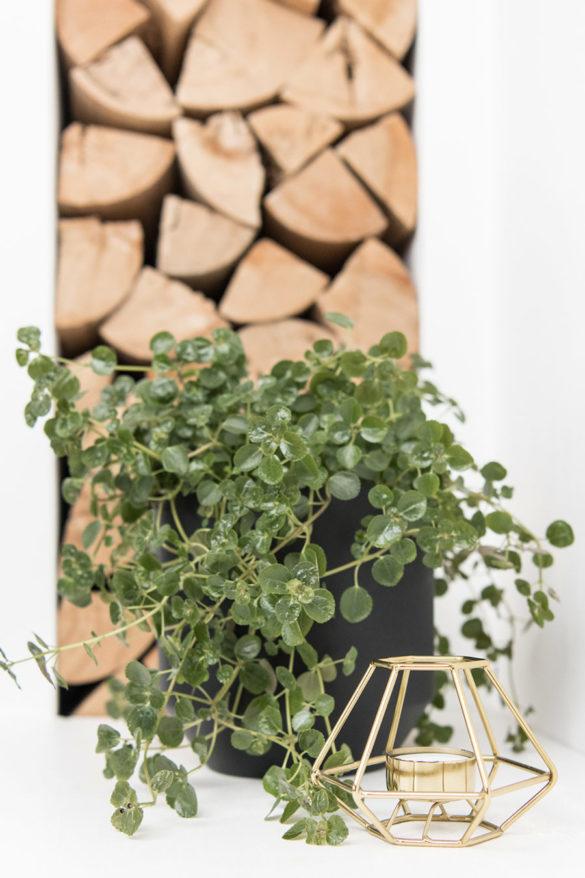 Grünpflanze im Wohnzimmer