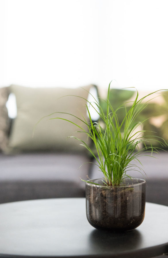 Grünpflanze im Glas statt im Topf