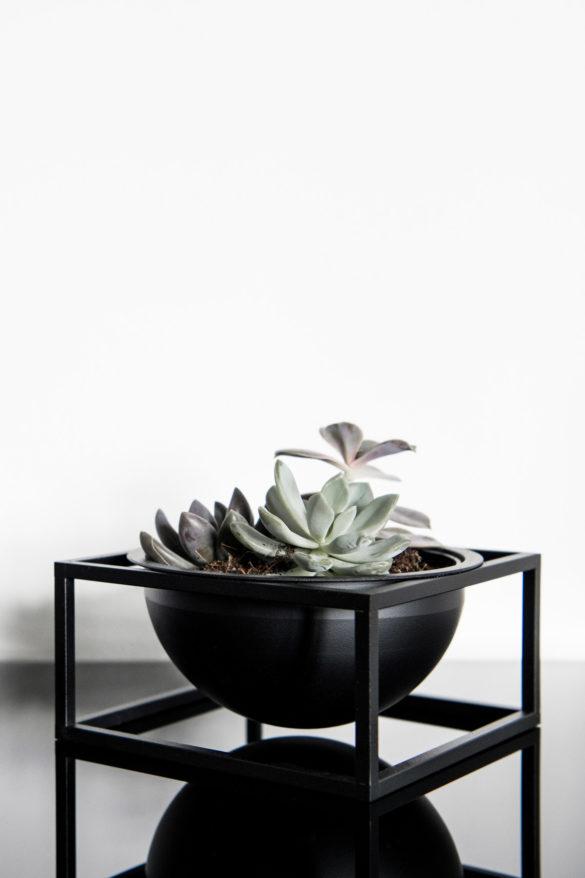 Sukkulenten Kubus Bowl By Lassen